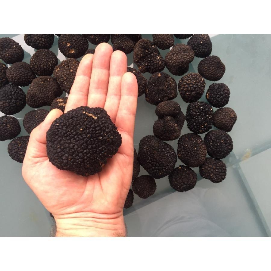 Fresh Black Summer Truffles (30-40g Avg.)