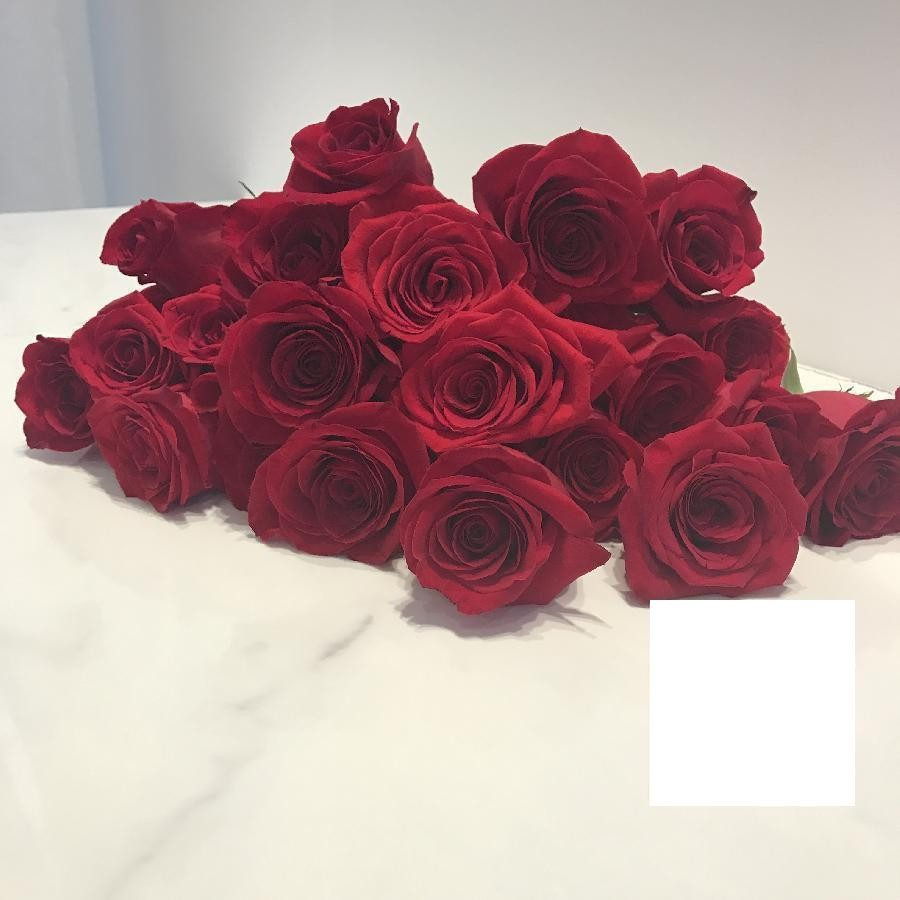 Beautifully Wrapped Dozen Roses In Valentines Day Colours - Red, Pink, or Mixed Colours