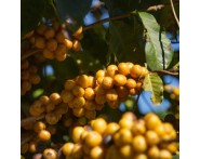 Fazenda Joia Rara Fermented Brazilian Coffee (1lb) Medium-Light Roast by Portfolio | Wine Online