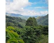 Inga Aponte Single Origin Colombian Coffee (1/2lb) Dark Roast by Portfolio Coffee Roasters | Wine Online