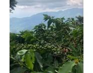 Jamaican Blue Mountain Single Origin Coffee (1/2lb) Medium-Light Roast by Portfolio Coffee Roasters   Wine Online