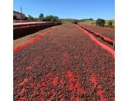 Fazenda Santa Monica Single-Origin Brazilian Coffee (1lb) Light Roast by Portfolio Coffee Roasters   Wine Online